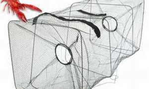 Ловушки для рыб – особености применения, разновидности