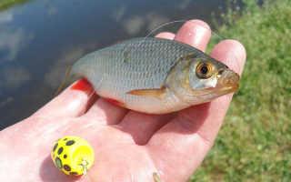 Ловля рыбы на поппер-поплавок (попла-поппер)