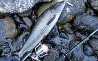 Рыбалка на хариуса: описание вида, методы ловли