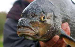 Ловля леща на фидер весной – выбор подходящих снастей и другие особенности рыбалки
