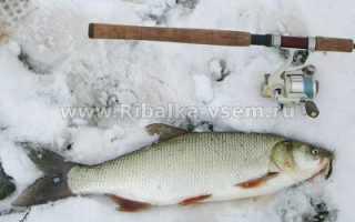 Ловля жереха зимой: рыбалка по открытой воде и со льда