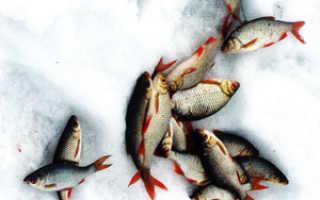 Красноперка: особенности ловли, наживка, снасти