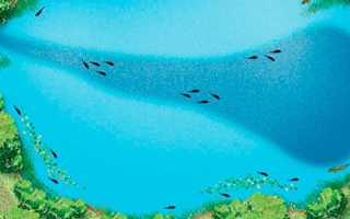 Что такое бровка: определения характерных мест водоема