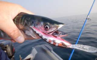Рыбалка на Черном море с берега и лодки: виды рыб и снасти для ловли