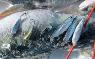 Ловля судака на тюльку зимой: правильные снасти, тактика и техника