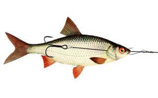 Снасточка для мертвой рыбки: описание и техника ловля хищной рыбы