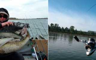 Ловля судака: снасти и способы рыбалки, используемые приманки