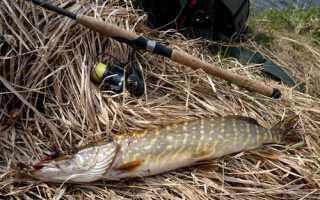 Особенности весенней рыбалки на щуку