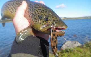 Феромоны для рыбы: их разновидности и варианты применения в рыбалке