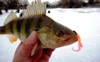 Применение силиконовых приманок на зимней рыбалке