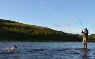 Рыба семга, биологическая характеристика и способы любительской ловли
