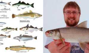 Плоская и круглая белая рыба: название, список