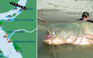 Ловля сома на фидер: выбор снастей и приманок, место и время рыбалки
