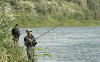 Ловля карпа на спиннинг – нестандартный подход к рыбалке