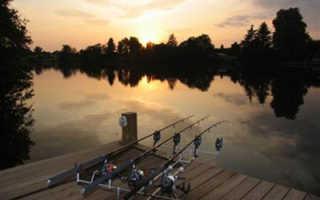Карп ночью: тонкости ловли трофейной рыбы в темное время суток