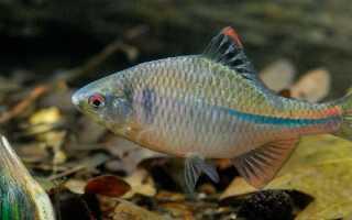 Рыба горчак: описание вида, поведения, зачем и на что ее ловить