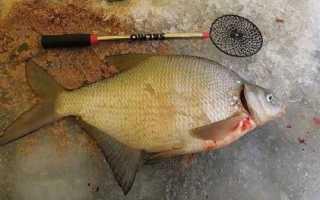 Ловля леща на коромысло: устройство снасти и техника рыбалки