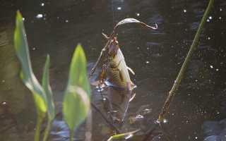 Донка с подводным поплавком для ловли сома – преимущества и особенности снасти