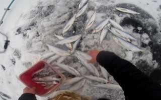 Особенности зимней рыбалки на чехонь
