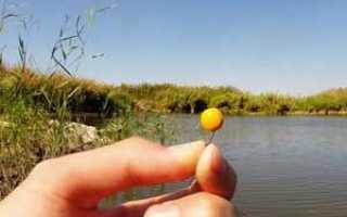 Ловля карпа на горох и способы приготовления гороха для рыбалки
