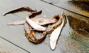 Питерский клуб рыбаков: деятельность, акции, новости с водоемов