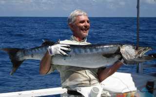 Рыба барракуда: описание хищницы, повадки, снасти и ловля