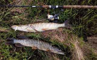 Ловля щуки весной на спиннинг: особенности рыбалки по месяцам