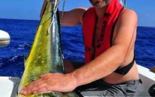 Тунец: особенности ловли, наживка, снасти