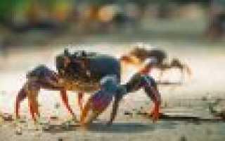 Открытие сезона ловли сахалинского краба. Выбор места и снасти, подбор наживки