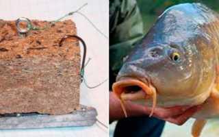 Что такое макуха, и как сделать уловистый макушатник на карпа?