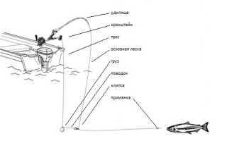 Троллинг с даунриггером: принцип работы устройства и техника ловли