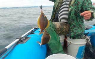 Камбала: особенности ловли, наживка, снасти