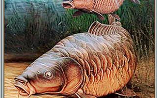 Рыба сазан, особые характеристики вида и способы любительской ловли