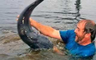 Рыбалка без удочки: голыми руками, подсобным инструментом