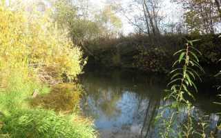 Ловля щуки на малых реках: особенности ужения