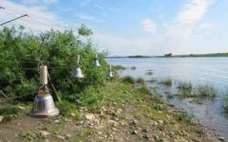 Снасти для ловли сома с берега: от простой донки до фидера
