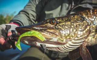 Ловля щуки на джиг осенью: особенности и секреты рыбалки