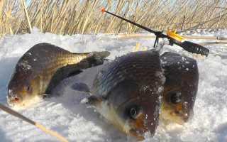 Зимняя ловля карася на мормышку: выбор приманки и техника игры
