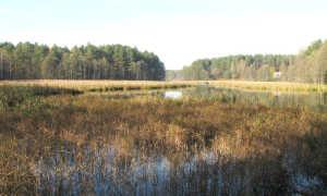 Рыбалка в болотистой местности