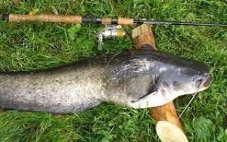 Ловля сома на спиннинг: особенности рыбалки с берега и лодки