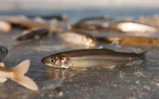 Ловля камбалы в Приморском крае. Все о рыбалке в теплое время года