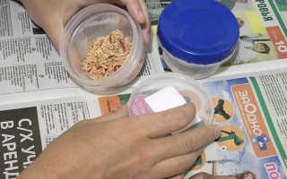 Разведение опарыша в домашних условиях: способы, хранение, окраска