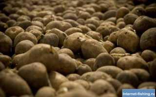 Ловля на картошку – особенности применения картофеля в качестве насадки