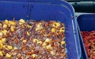 Как правильно прикармливать рыбу: тактика, состав корма и правила его подачи в зону ловли