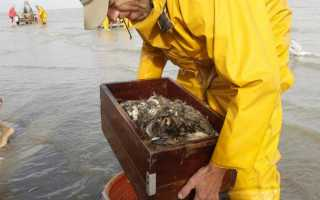 Ловля креветок: разновидности, места обитания, как поймать